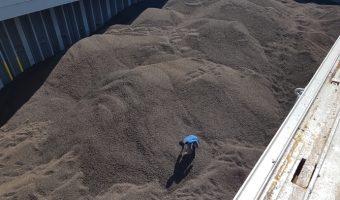 ekspor-cangkang-sawit-riau-3